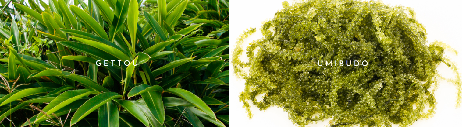 ruhaku-cosmetiques-japonais-bio-ingredients-gettou-okinawa-ecocert
