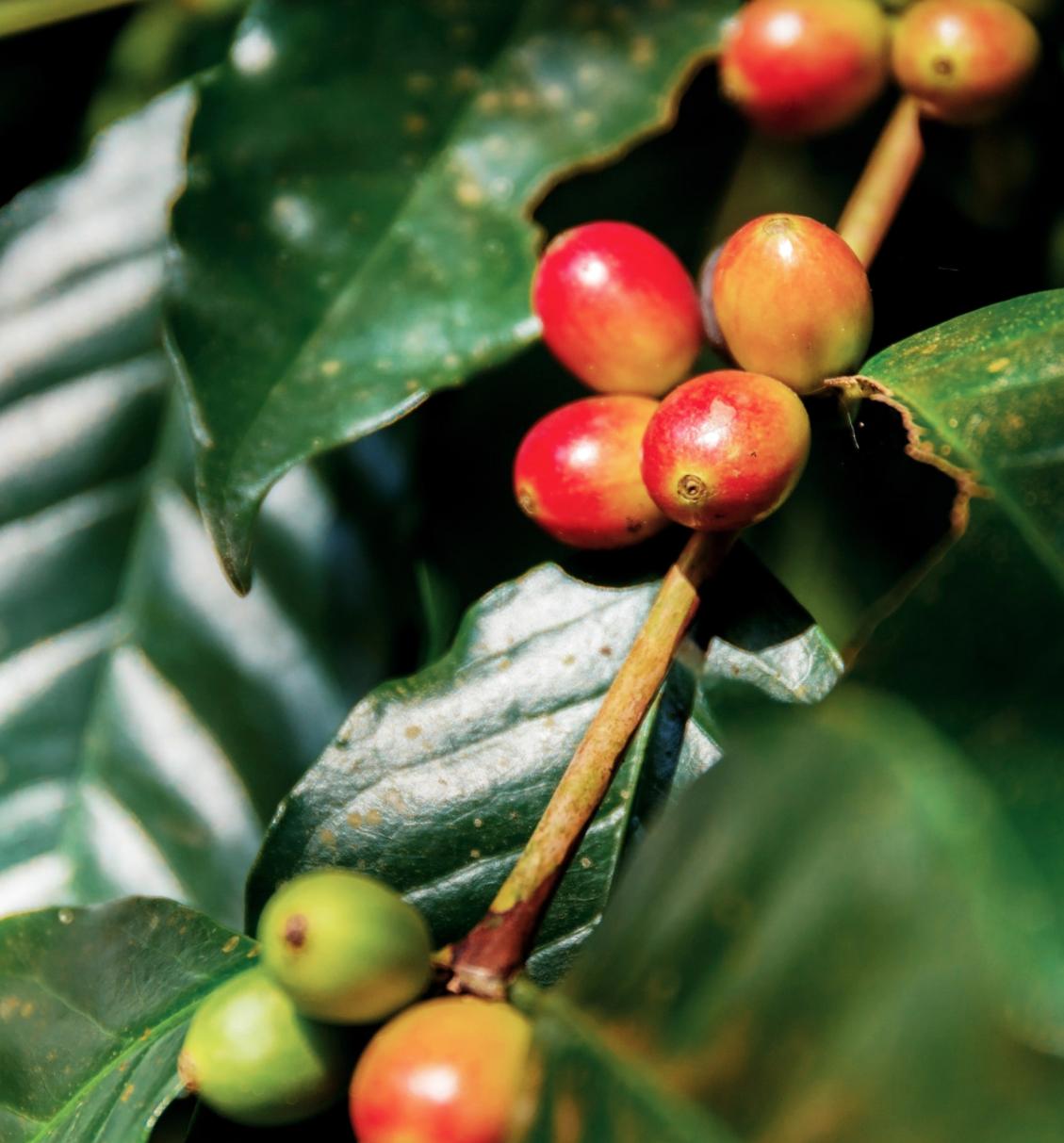 beigic-cosmetiques-coreens-clean-au-cafe-vert-bio-avis-revue